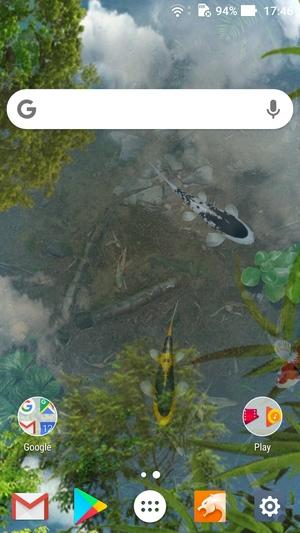 錦鯉水池のライブ壁紙1