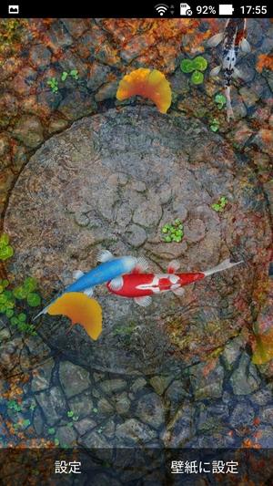 錦鯉水池のライブ壁紙8